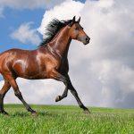 caballo-guarnicioneria-rubio-doma-vaquera-cola-crin-cosmetica-peinado