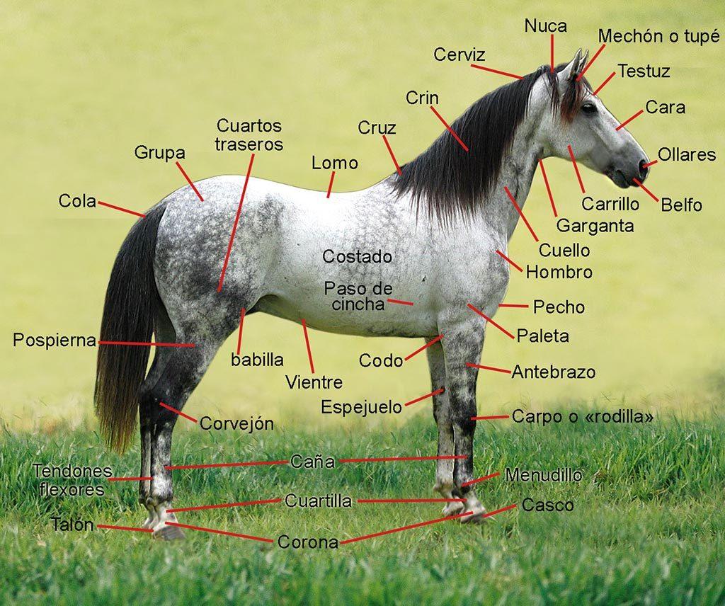 partes-del-caballo-guarnicioneria-rubio