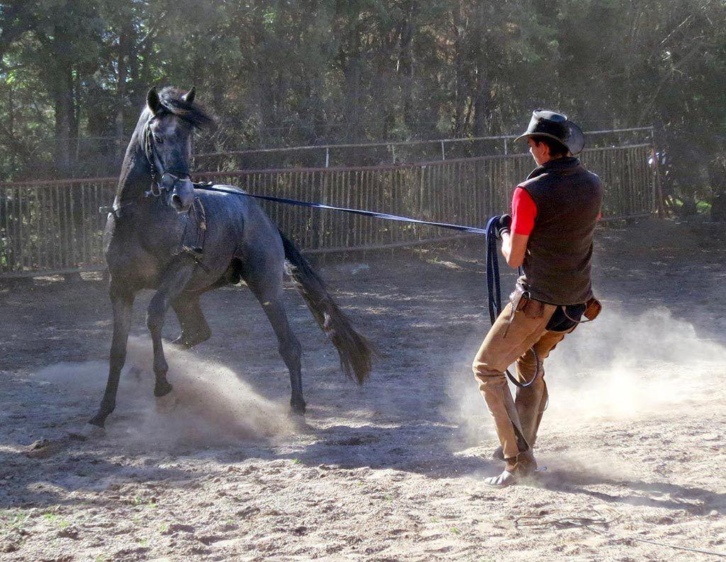 como-domar-caballo-guarnicioneria-angel-rubio