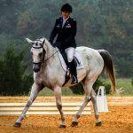 caballo-sumiso-guarnicioneria-angel-rubio